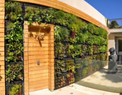 modern outdoor wall garden